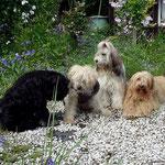 Yeshi, Indra, Milka, Bya-ra - Mai 2014