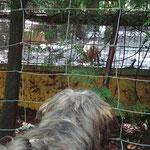 Ja, wer ist denn nun das Wildschwein? Vor oder hinter dem Zaun?