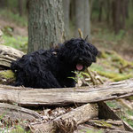 Spaziergang im Wald - Yeshi