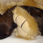F-Wurf - Hündin Nr. 1 - 1 Woche alt - Kuschelpüppchen