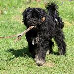Yeshi im Garten - 5 Monate alt