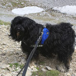 Bommels Urlaub in den Bergen - 2014