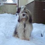 Milka - 7 Jahre alt - Dezember 2014