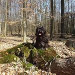 Yeshi mein Waldschrat