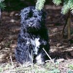 Yeshi im Garten - 17,5 Wochen alt