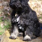 Kleines Männlein - Yeshi - 5 Monate alt