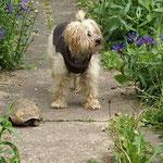 Oma Indra mit Kumpel Hugo im Garten