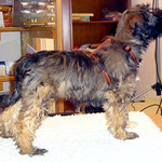 Hundeschule DogFidence - Femi in Pose - 15,5 Wochen alt
