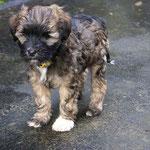 F-Wurf - Femi - 8,5 Wochen alt