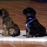Training in der Hundeschule DogFidence - Januar 2014