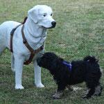 Bommel hat keine Angst vor großen Hunden, schon gar nicht, wenn sie nicht echt sind.