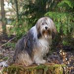 Milka, Königin der Wälder