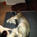 Femi - So ein braves Mädchen. Sie ist die Ruhe selbst beim Bürsten.