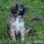 F-Wurf - Fiona - 7 Wochen alt