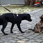 Hundeschule DogFidence - Femi - 15,5 Wochen alt