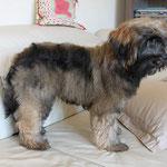 F-Wurf - Mon-sha - ca. 5 Monate alt