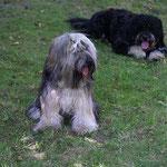 Percy und Finley