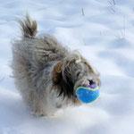 Rennen im Schnee mit dem geliebten Bällchen!