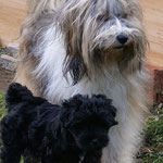 F-Wurf - Yeshi mit Mama Milka