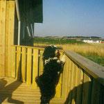 Gesars erster Urlaub in Dänemark - Sommer 1995