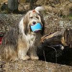 Milka mit Bällchen im Wald - Frühling 2014