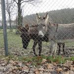 F-Wurf - Femi und Yeshi im Opelzoo - 15 Wochen alt