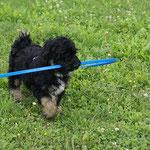 E-Wurf - Bommel in der Hundeschule