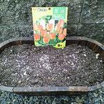 オレンジクイーン 球根の植えこみ 2009.11.29