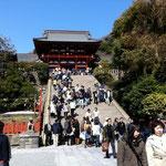 お天気に恵まれました、鎌倉の鶴岡八幡宮。