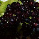 Huckleberries zum Frühstück