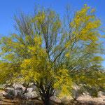 Gelber Farbtupfer in der kargen Landschaft