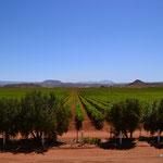 Weinanbaugebiet im Norden der Baja