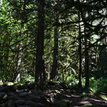 Zauberwald im Lynn Canyon