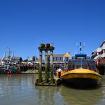 Whale Watching-Tour in Steveston