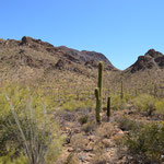 Im Saguaro National Park