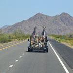Ein höchst ungewöhnlicher Tiertransport von Blechpferden...