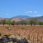 Trockene Landschaft in Oaxaca