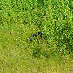 Unser erster Schwarzbär (oder was davon noch zu erkennen ist...;-))
