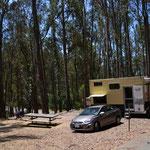 Unser Plätzchen im Eukalyptuswald
