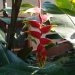 Erstaunliche Pflanzenwelt