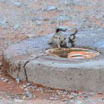 Nobbi versorgt Streifenhörnchen und Vögel mit Wasser