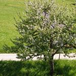 Frühling in Fallenbach...