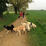 éducation canine à Sarzeau dans le  56 - Bien avec Mon Chien ! - Rachel Meslé