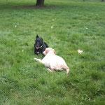 Rachel Meslé, éducateur canin et comportementaliste professionnelle à Vannes et à Locminé - 56 - Bien avec Mon Chien !