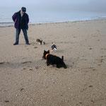 éducation canine à Auray dans le  56 - Bien avec Mon Chien ! - Rachel Meslé