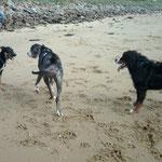 éducateur canin et comportementaliste dans le secteur de Surzur - Bien avec Mon Chien ! - Rachel Meslé