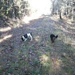 éducateur canin et comportementaliste à Vannes dans le 56 - Bien avec Mon Chien ! - Rachel Meslé