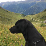 Murmeljagd in Osttirol