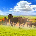 Meine Tierstation im Outback 3D