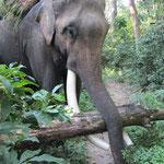 treffen mit einem Elefanten